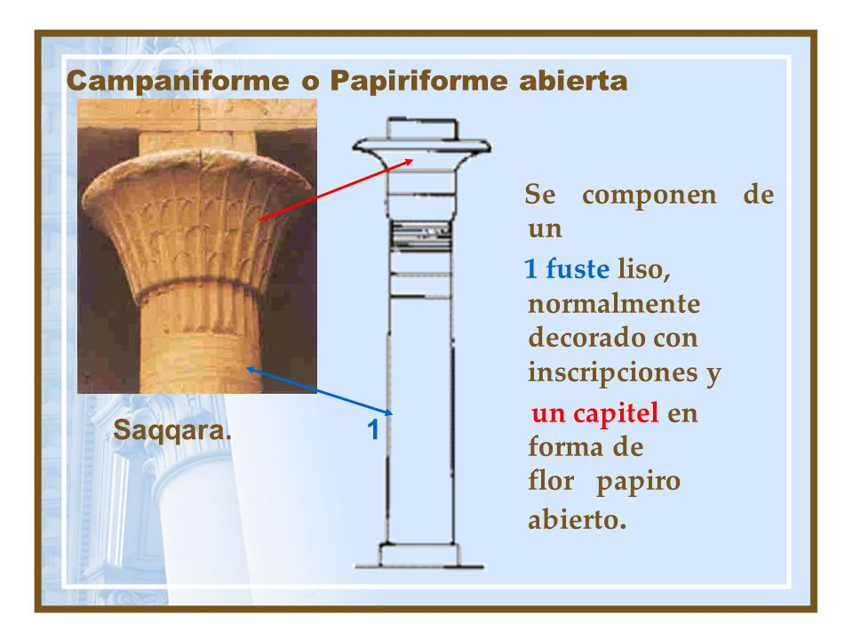 Campaniforme o Papiriforme abierta
