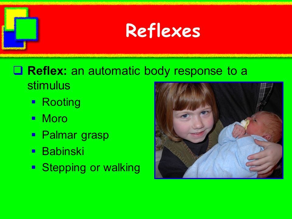 Reflexes Reflex: an automatic body response to a stimulus Rooting Moro