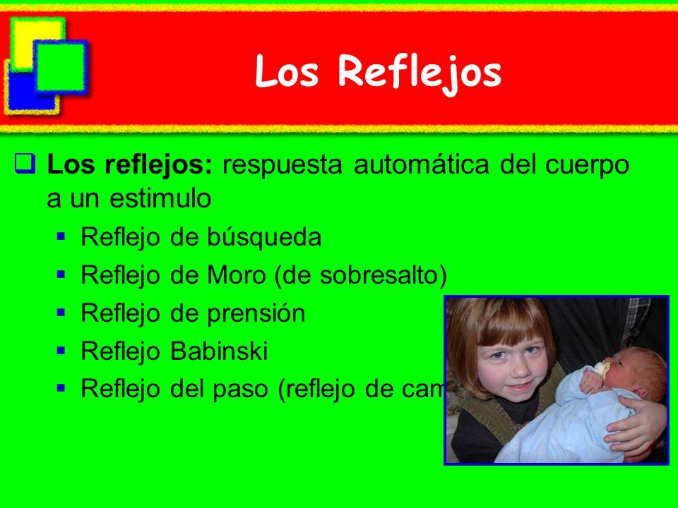 Los Reflejos Los reflejos: respuesta automática del cuerpo a un estimulo. Reflejo de búsqueda. Reflejo de Moro (de sobresalto)
