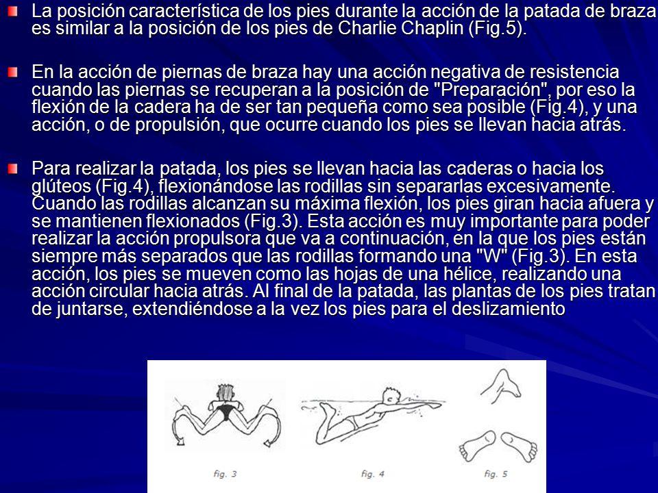 La posición característica de los pies durante la acción de la patada de braza es similar a la posición de los pies de Charlie Chaplin (Fig.5).