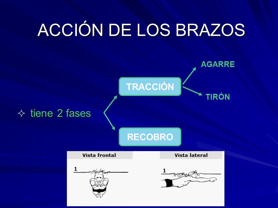 ACCIÓN DE LOS BRAZOS tiene 2 fases AGARRE TRACCIÓN TIRÓN RECOBRO