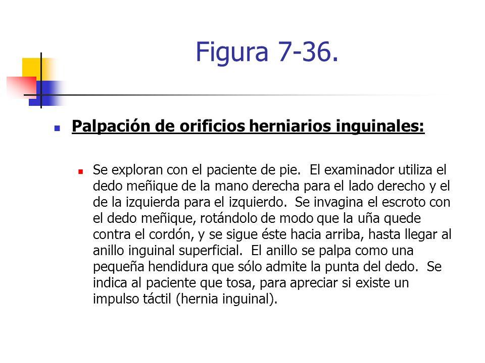 Figura 7-36. Palpación de orificios herniarios inguinales: