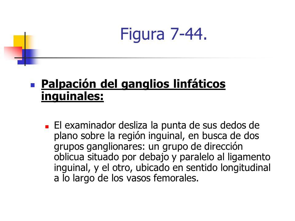 Figura 7-44. Palpación del ganglios linfáticos inguinales: