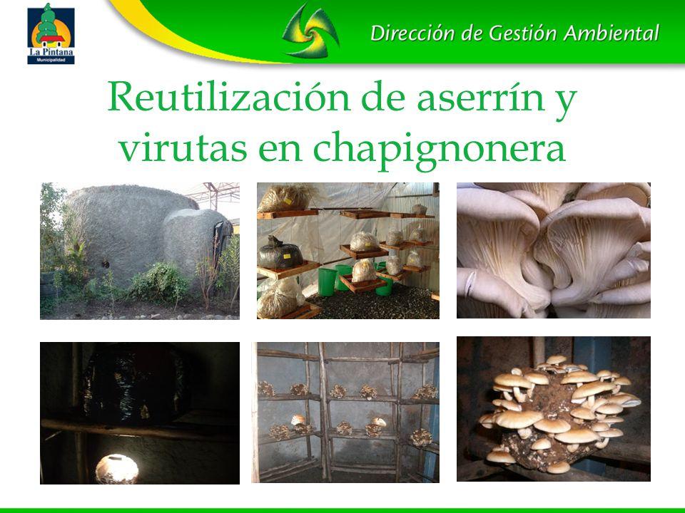 Reutilización de aserrín y virutas en chapignonera