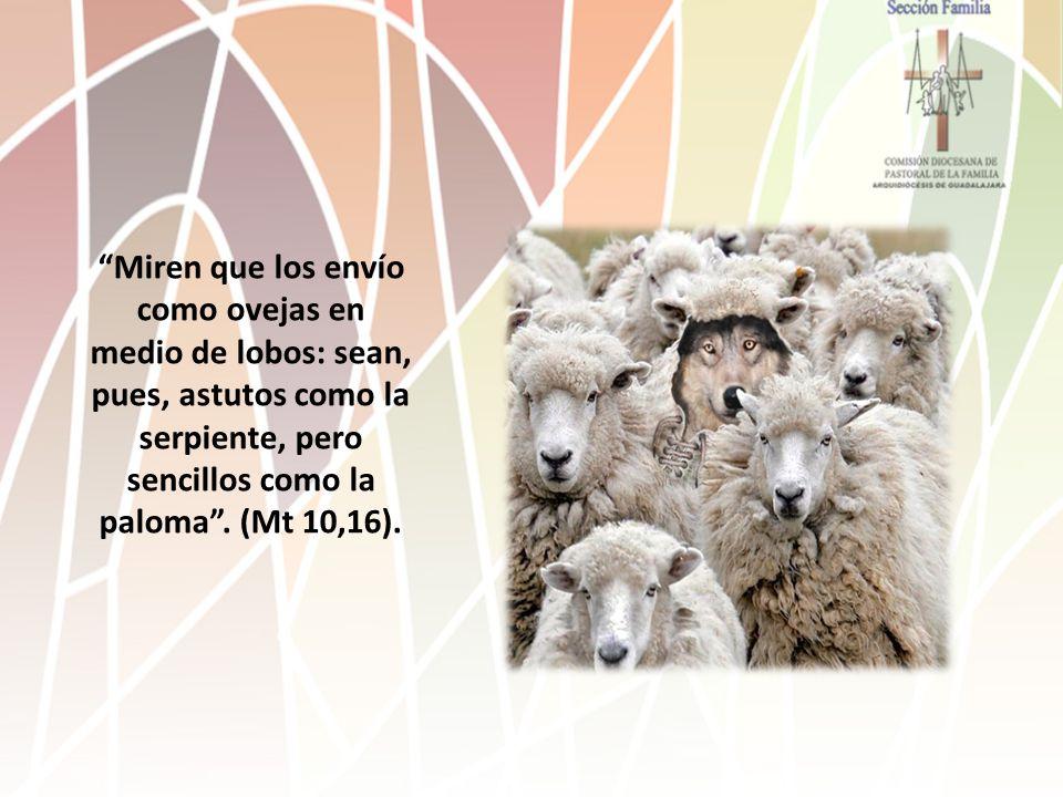 Miren que los envío como ovejas en medio de lobos: sean, pues, astutos como la serpiente, pero sencillos como la paloma .