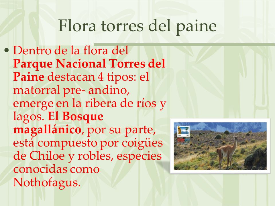 Flora torres del paine