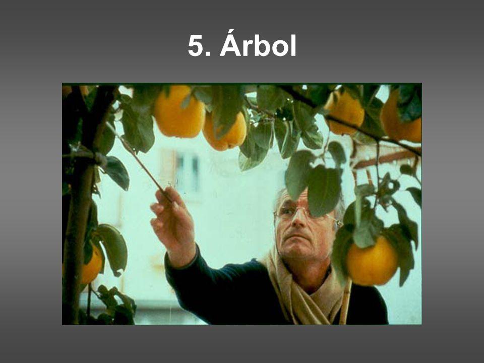 5. Árbol