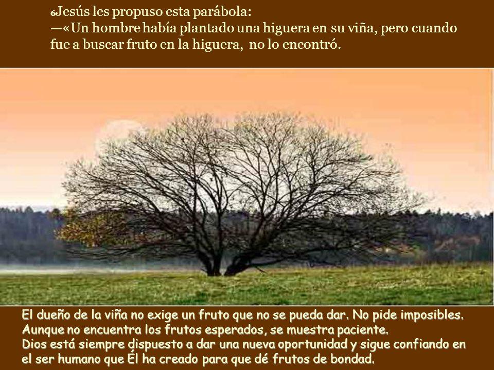 6Jesús les propuso esta parábola: —«Un hombre había plantado una higuera en su viña, pero cuando fue a buscar fruto en la higuera, no lo encontró.