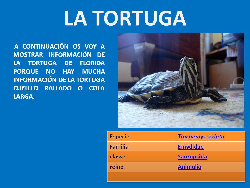LA TORTUGA Especie Trachemys scripta Familia Emydidae classe