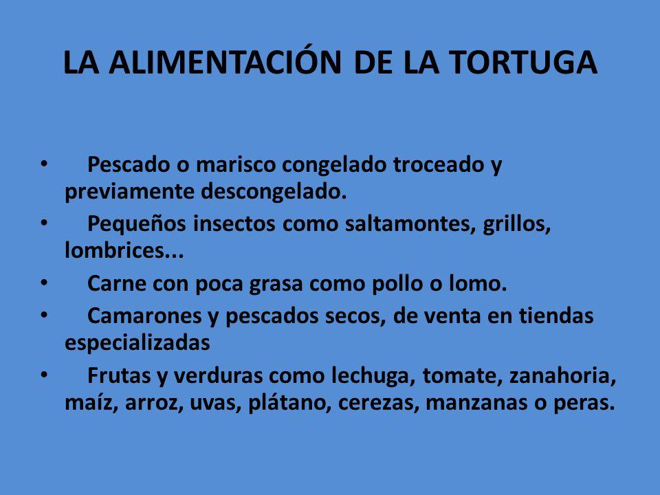 LA ALIMENTACIÓN DE LA TORTUGA