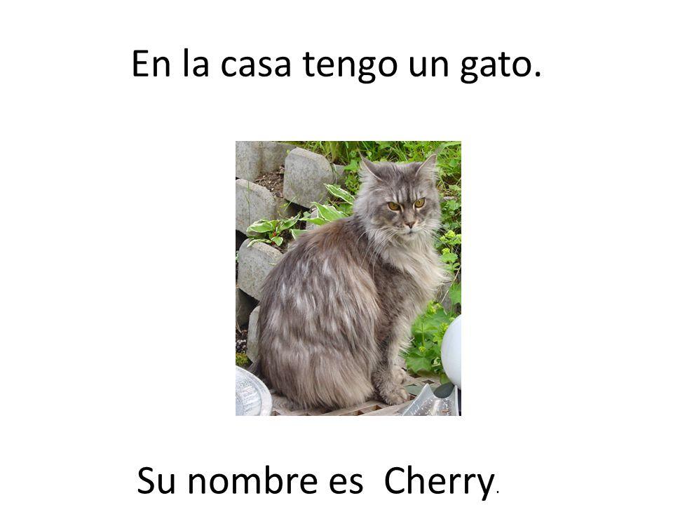 En la casa tengo un gato. Su nombre es Cherry.