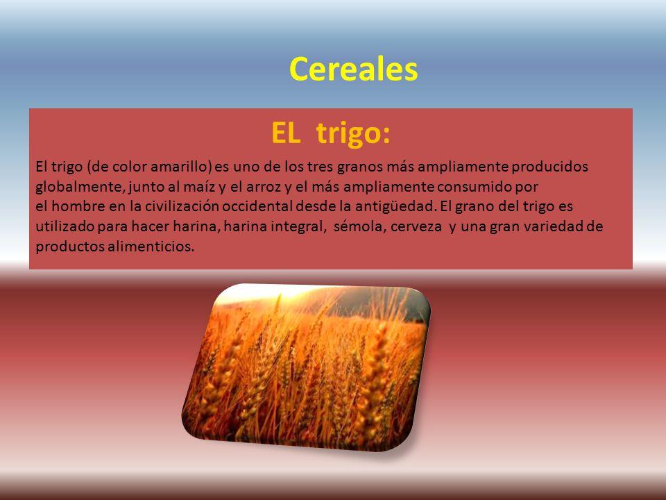 Cereales EL trigo: