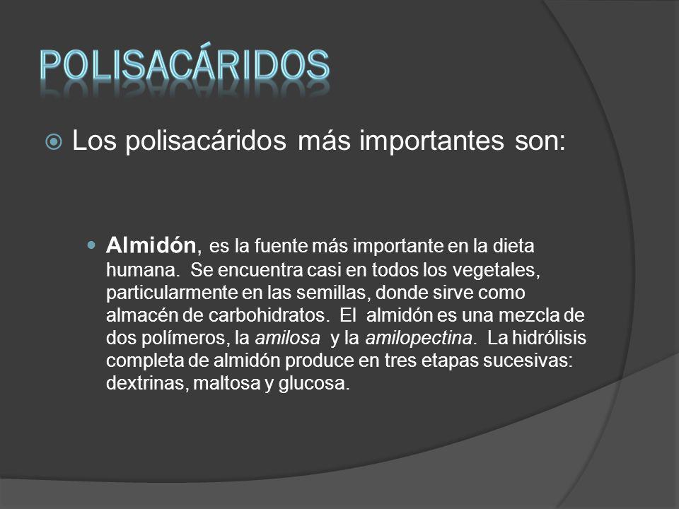 PoliSACÁRIDOS Los polisacáridos más importantes son:
