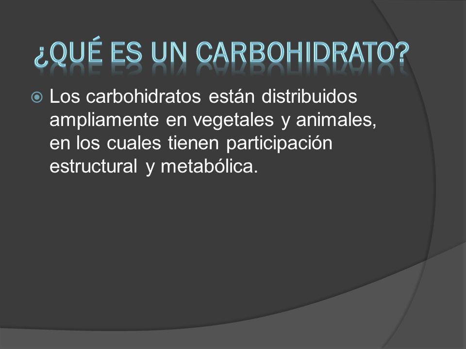 ¿Qué es un carbohidrato