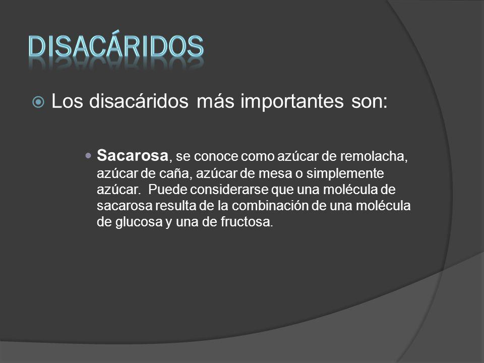 diSACÁRIDOS Los disacáridos más importantes son: