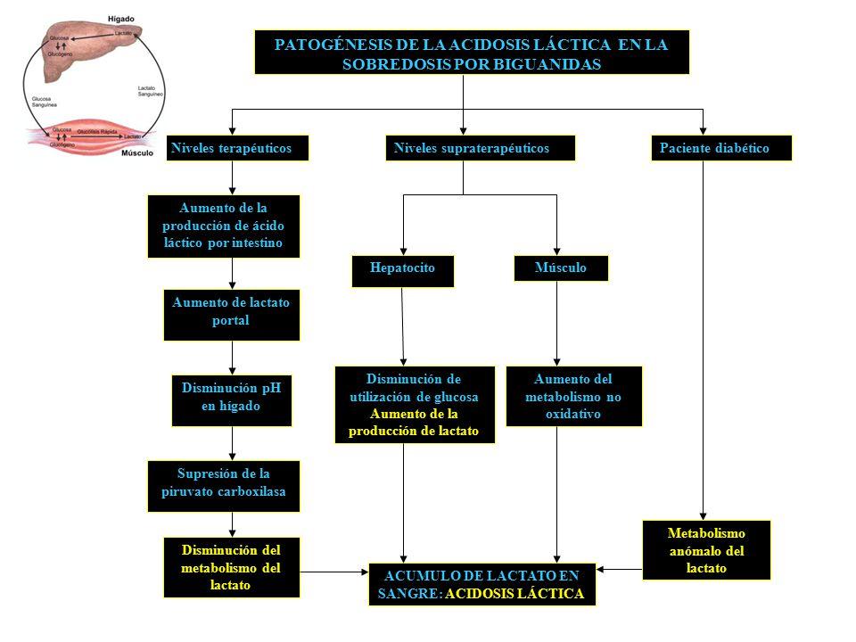 PATOGÉNESIS DE LA ACIDOSIS LÁCTICA EN LA SOBREDOSIS POR BIGUANIDAS