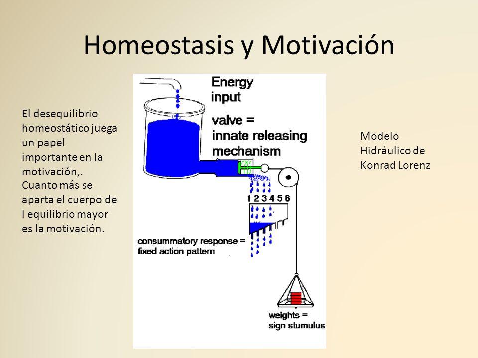 Homeostasis y Motivación