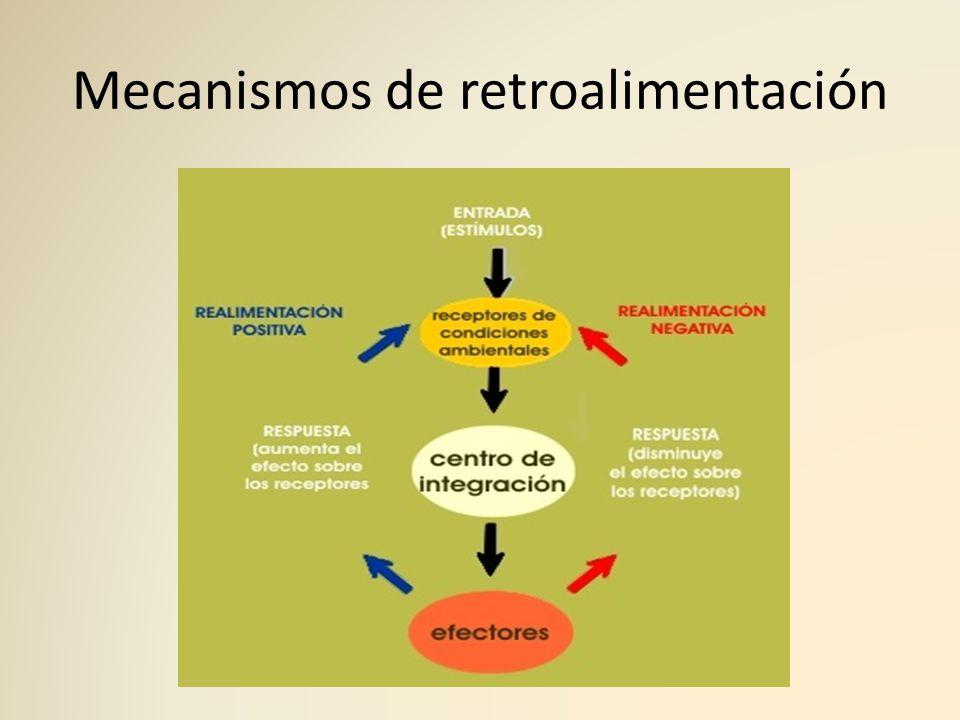 Mecanismos de retroalimentación