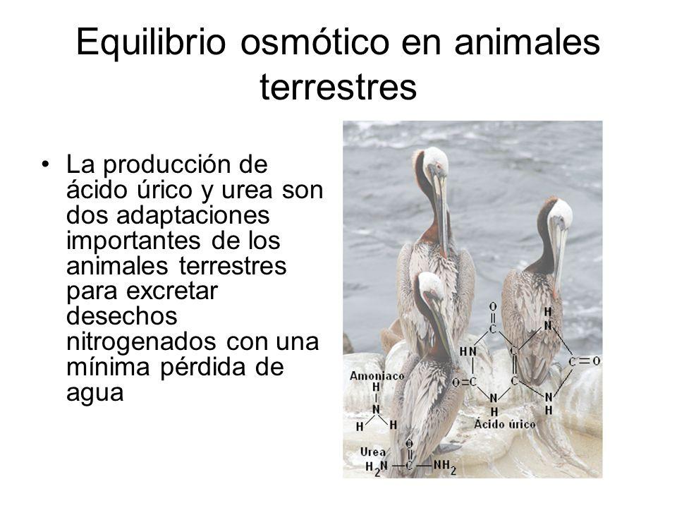 Equilibrio osmótico en animales terrestres