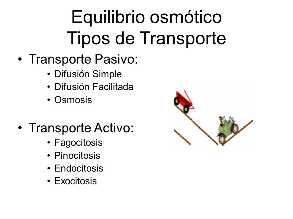 Equilibrio osmótico Tipos de Transporte