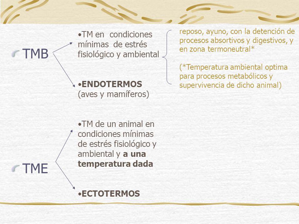 TMB TME TM en condiciones mínimas de estrés fisiológico y ambiental