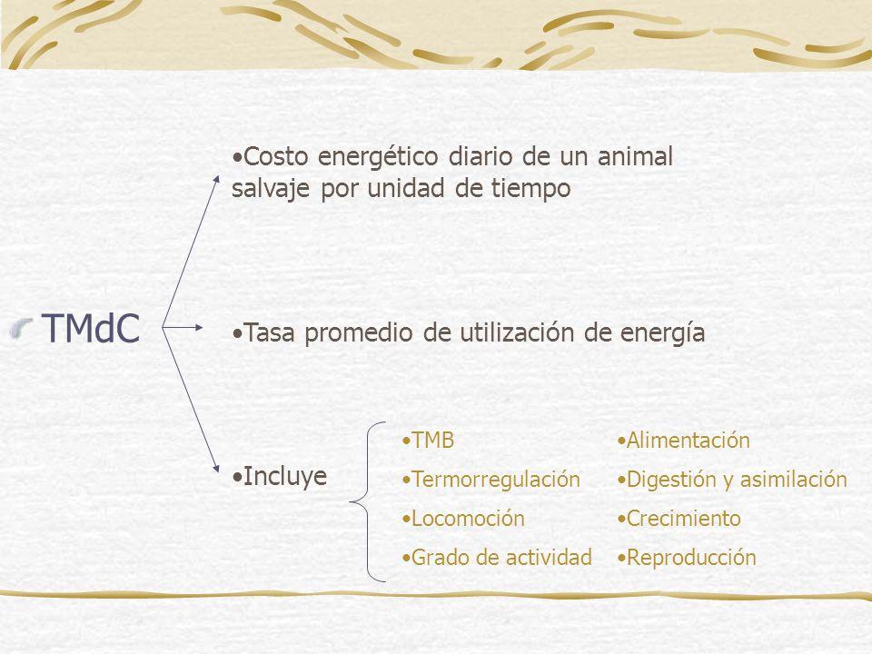 TMdC Costo energético diario de un animal salvaje por unidad de tiempo