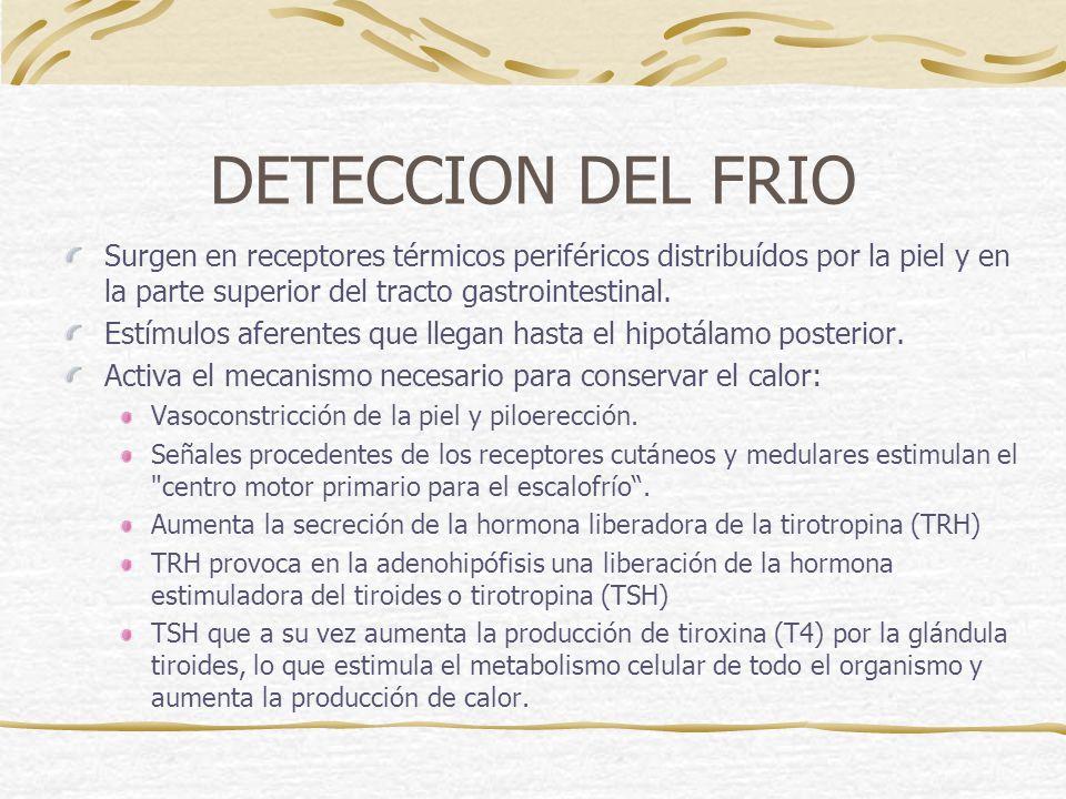 DETECCION DEL FRIO Surgen en receptores térmicos periféricos distribuídos por la piel y en la parte superior del tracto gastrointestinal.
