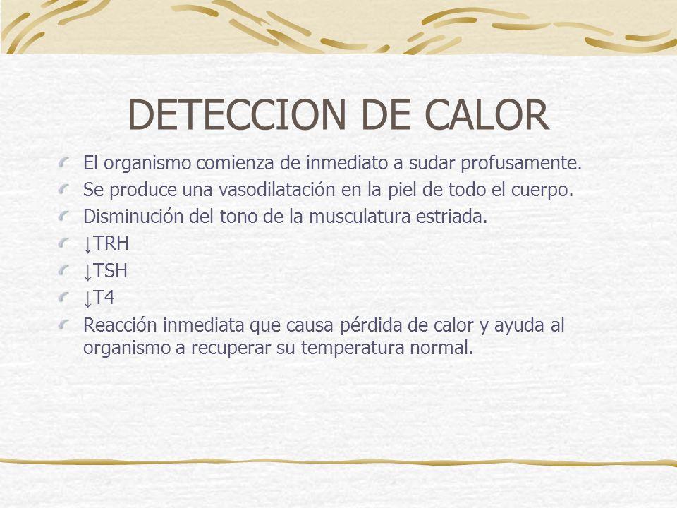 DETECCION DE CALOR El organismo comienza de inmediato a sudar profusamente. Se produce una vasodilatación en la piel de todo el cuerpo.