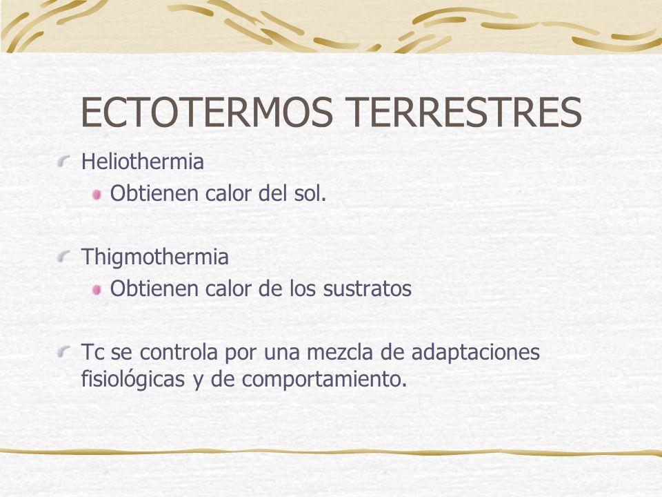 ECTOTERMOS TERRESTRES