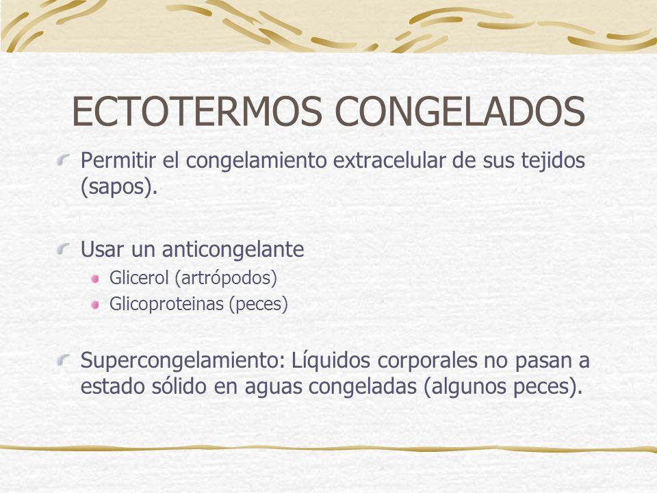 ECTOTERMOS CONGELADOS