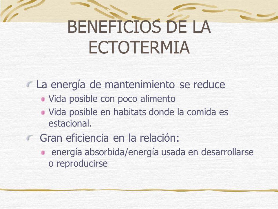 BENEFICIOS DE LA ECTOTERMIA