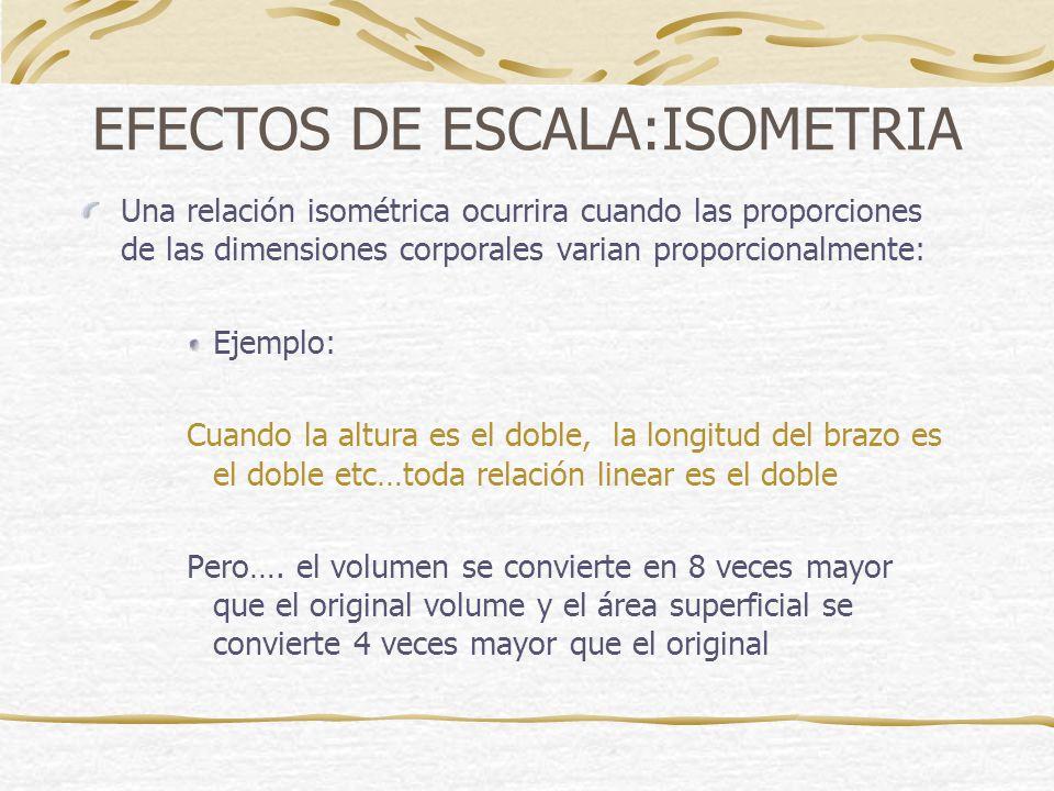 EFECTOS DE ESCALA:ISOMETRIA