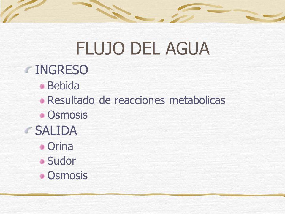 FLUJO DEL AGUA INGRESO SALIDA Bebida