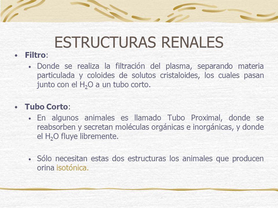 ESTRUCTURAS RENALES Filtro: