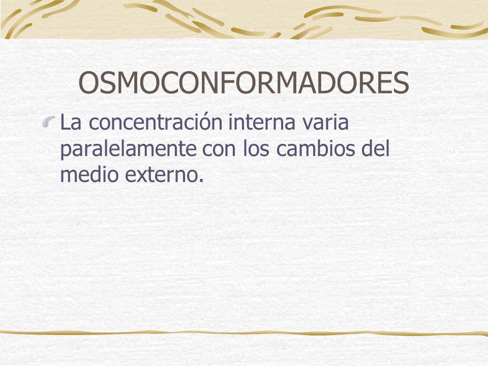 OSMOCONFORMADORES La concentración interna varia paralelamente con los cambios del medio externo.