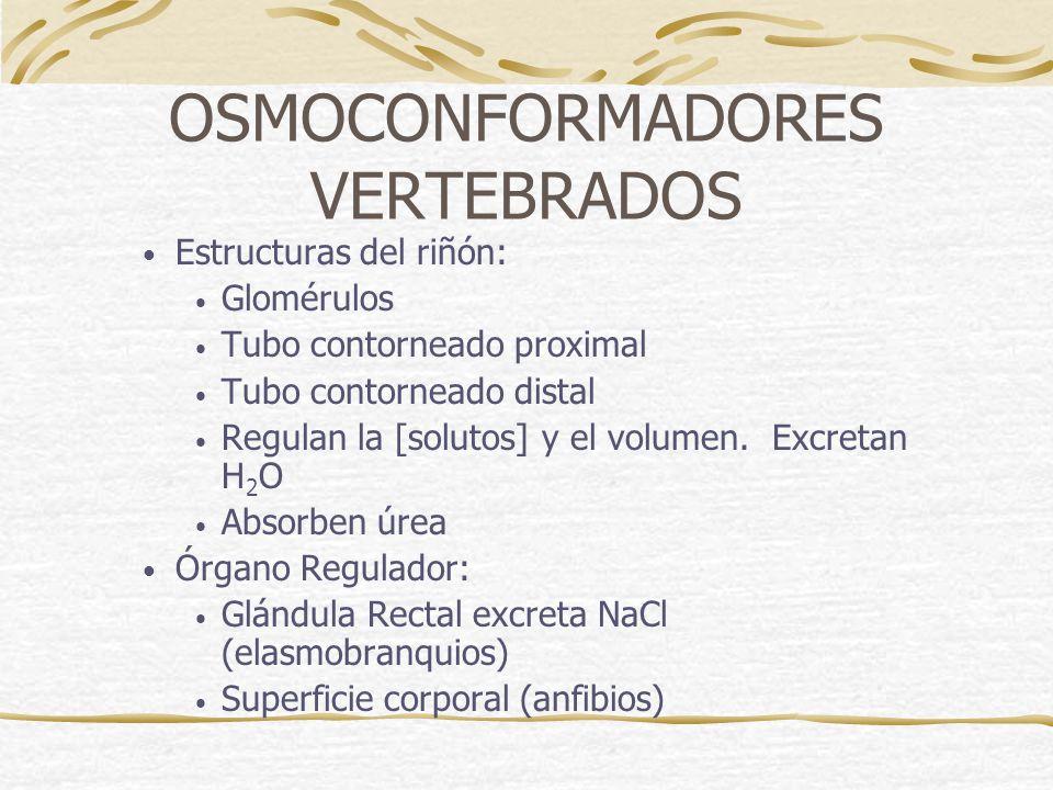 OSMOCONFORMADORES VERTEBRADOS