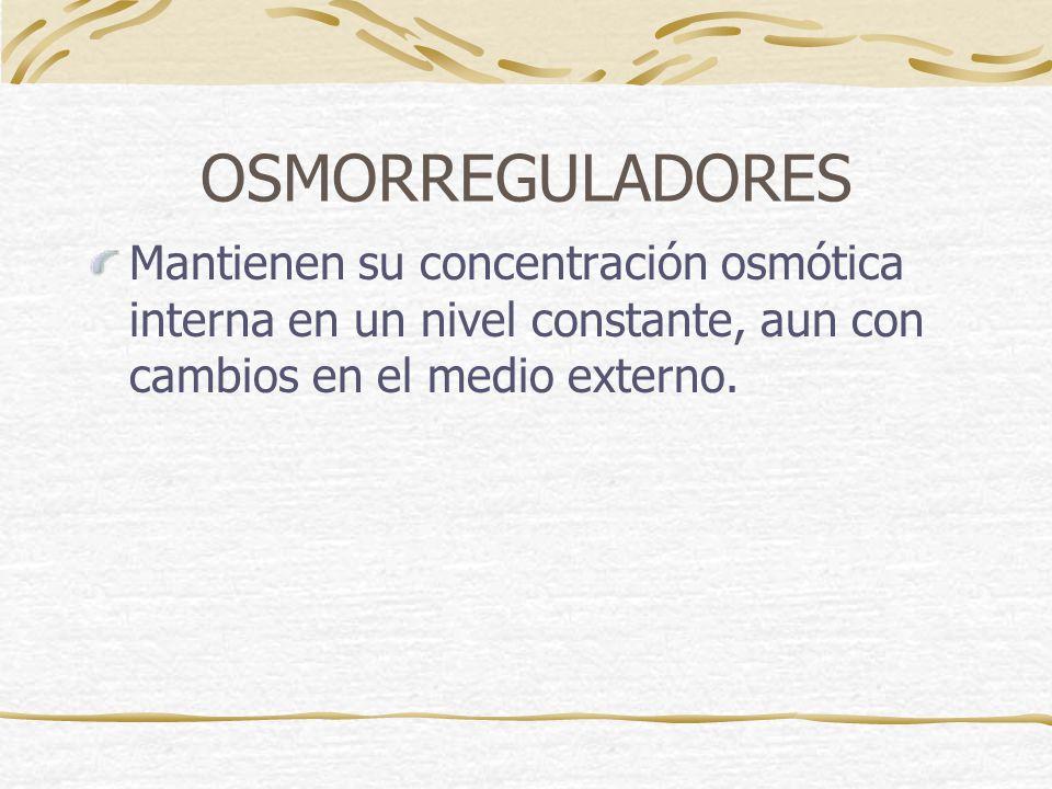 OSMORREGULADORES Mantienen su concentración osmótica interna en un nivel constante, aun con cambios en el medio externo.