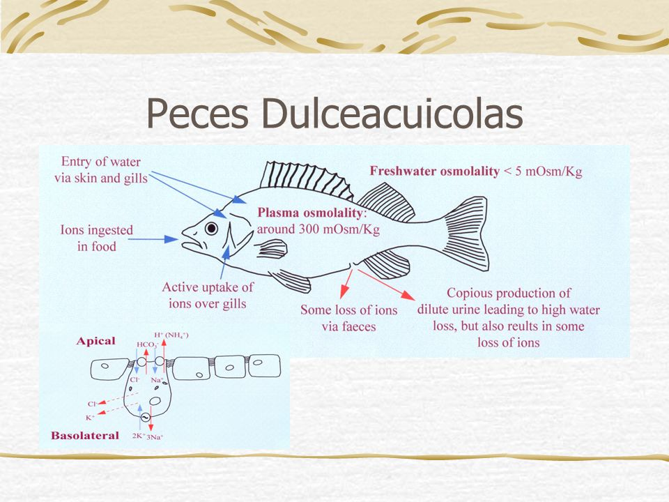 Peces Dulceacuicolas