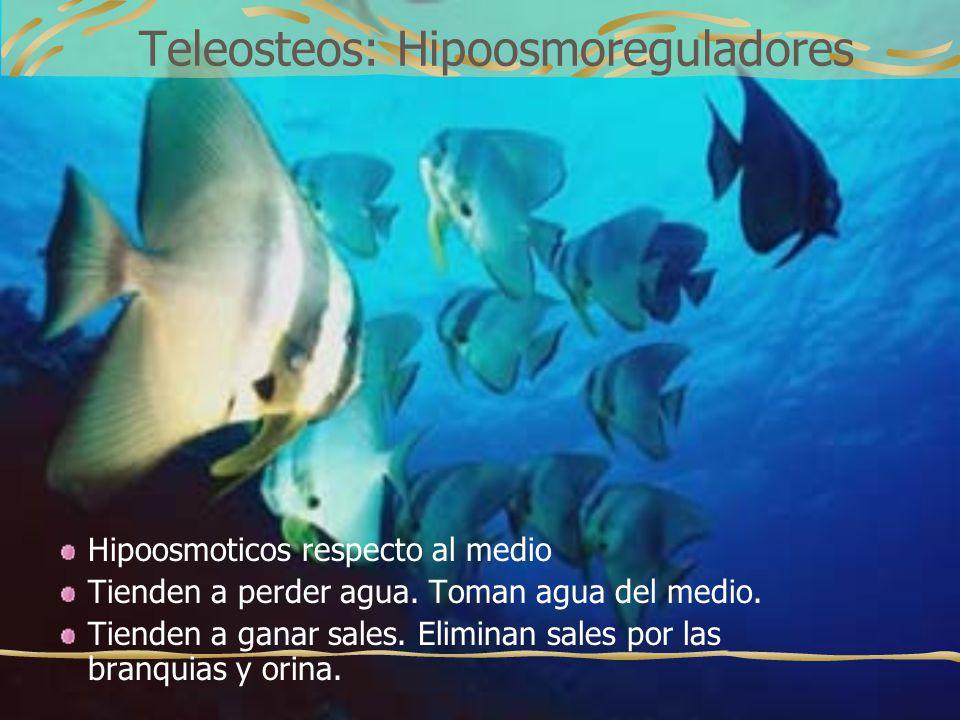Teleosteos: Hipoosmoreguladores