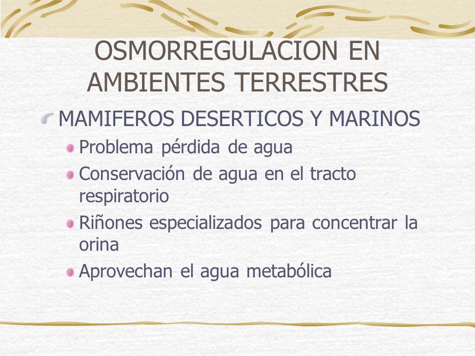 OSMORREGULACION EN AMBIENTES TERRESTRES