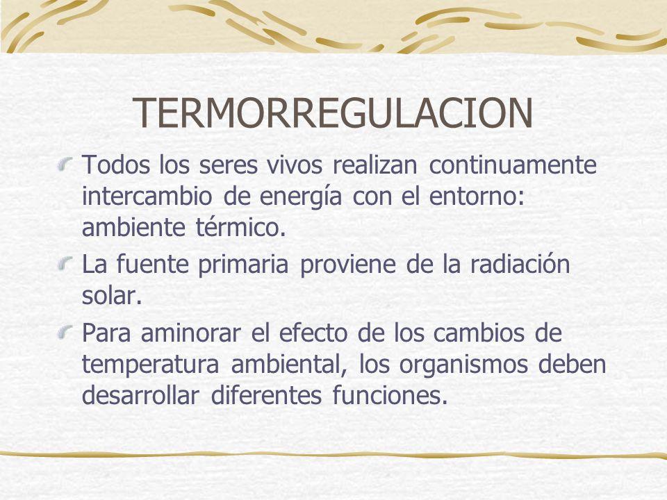 TERMORREGULACION Todos los seres vivos realizan continuamente intercambio de energía con el entorno: ambiente térmico.