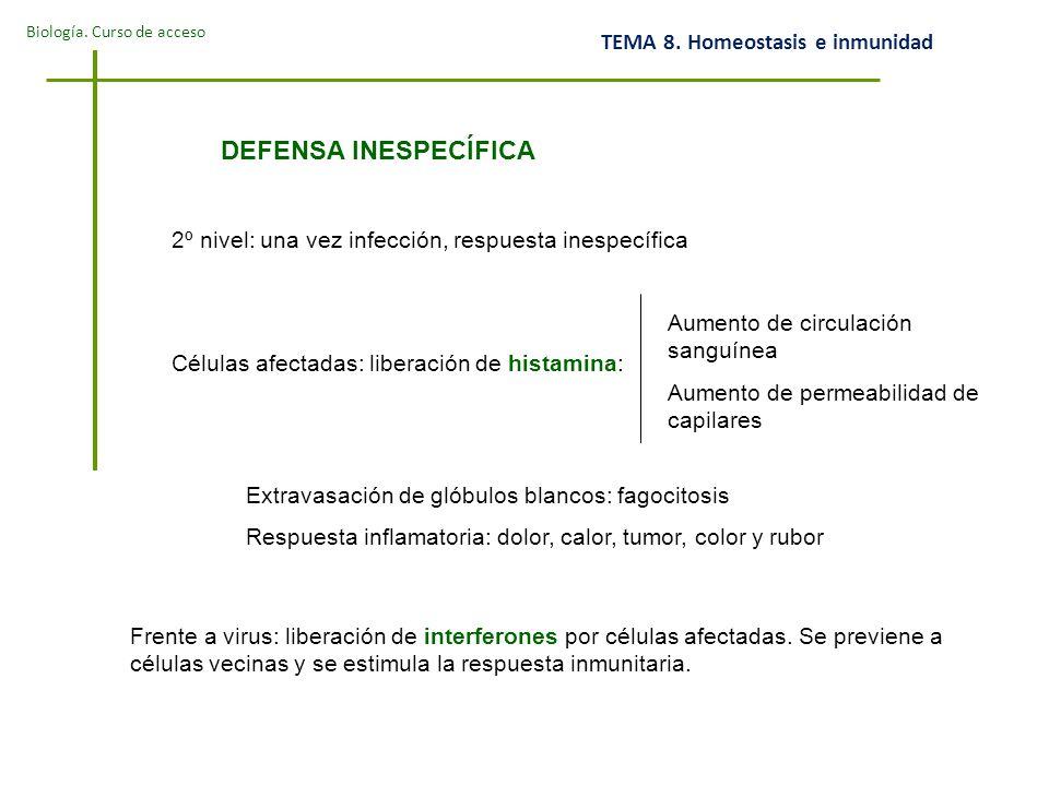 DEFENSA INESPECÍFICA 2º nivel: una vez infección, respuesta inespecífica. Aumento de circulación sanguínea.
