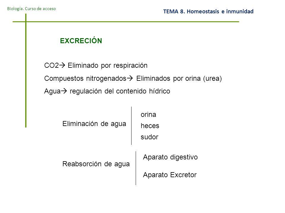 EXCRECIÓN CO2 Eliminado por respiración. Compuestos nitrogenados Eliminados por orina (urea) Agua regulación del contenido hídrico.
