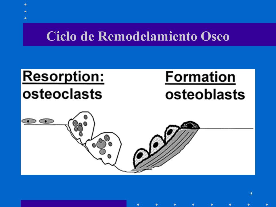 Ciclo de Remodelamiento Oseo