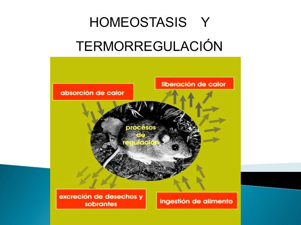 HOMEOSTASIS Y TERMORREGULACIÓN