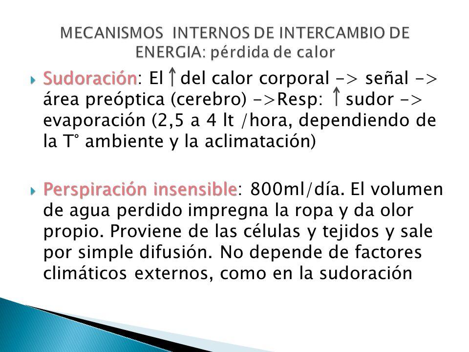MECANISMOS INTERNOS DE INTERCAMBIO DE ENERGIA: pérdida de calor