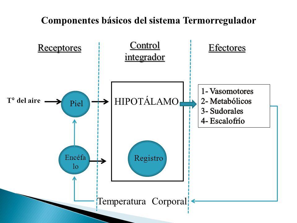 Componentes básicos del sistema Termorregulador