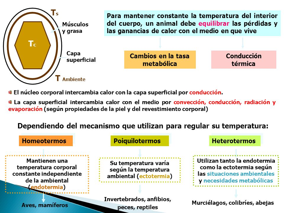 Para mantener constante la temperatura del interior del cuerpo, un animal debe equilibrar las pérdidas y las ganancias de calor con el medio en que vive