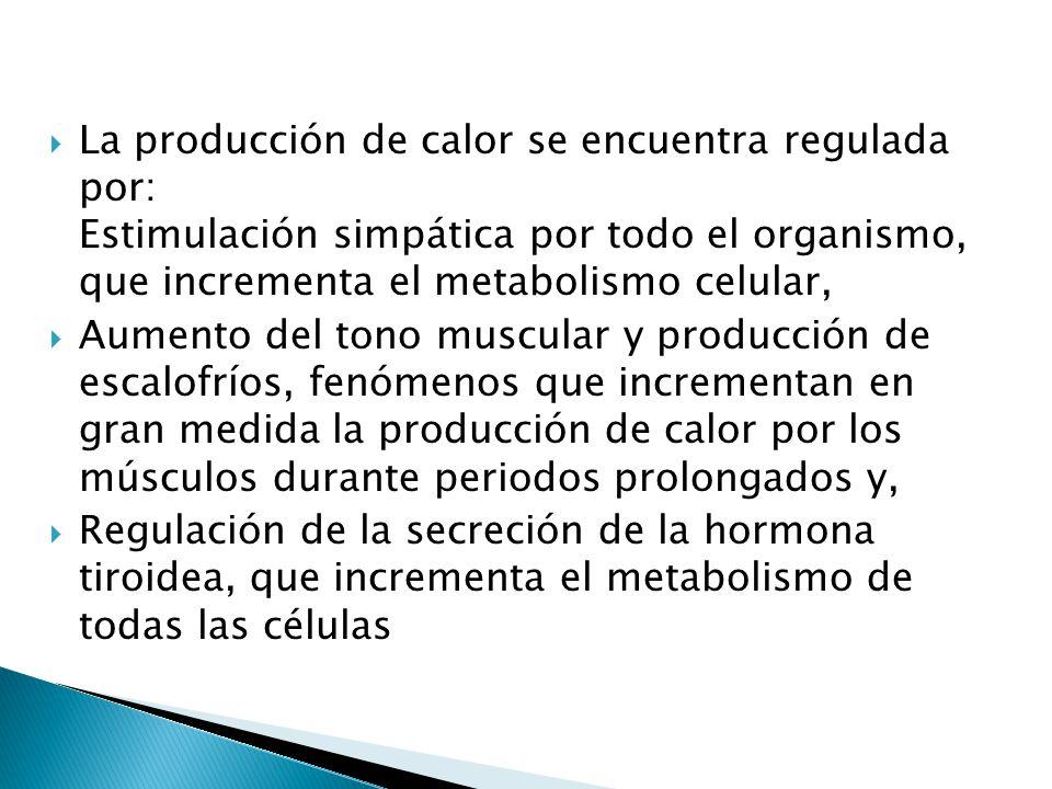 La producción de calor se encuentra regulada por: Estimulación simpática por todo el organismo, que incrementa el metabolismo celular,