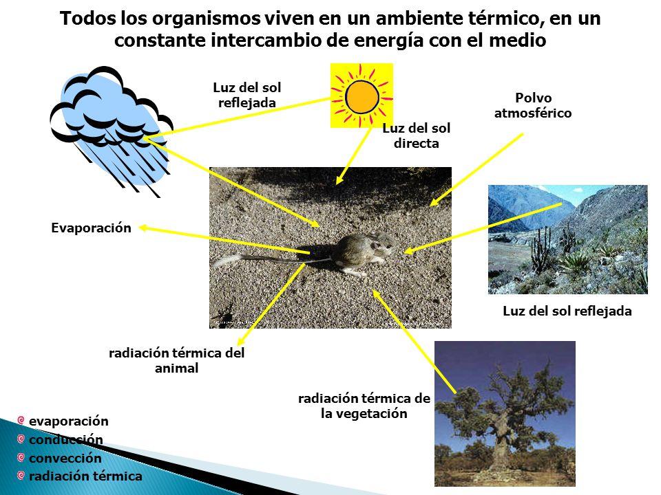 radiación térmica del animal radiación térmica de la vegetación